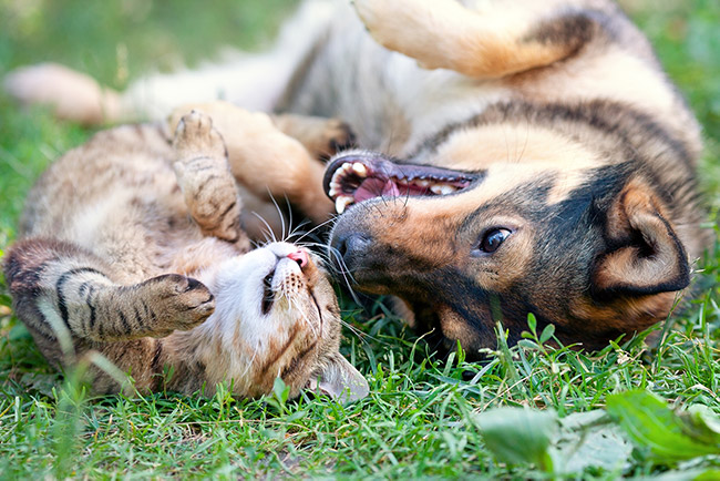 Cat And Dog Lying On Their Backs With Their Faces Curved Toward Each Other On A Green Lawn